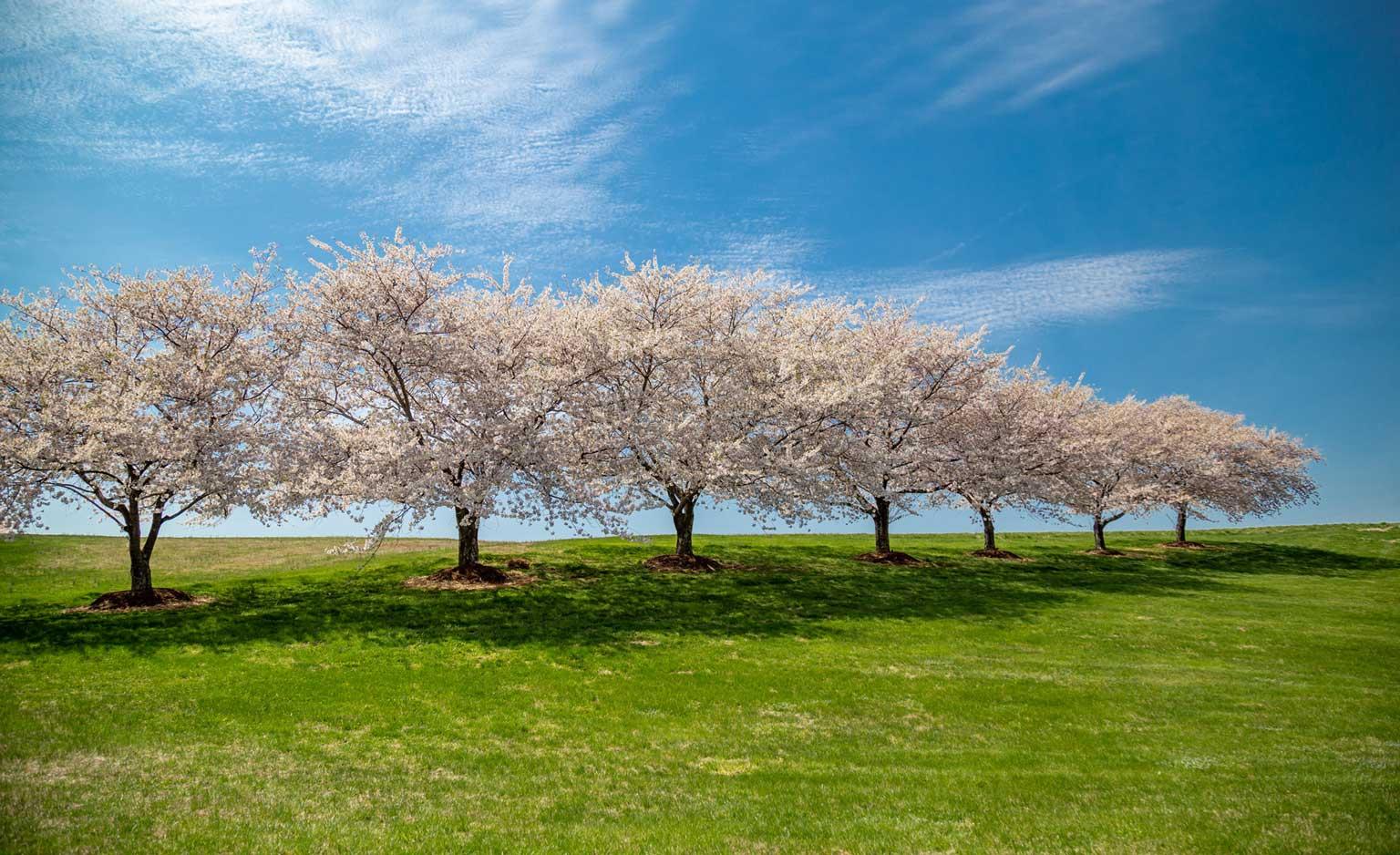 Springing Forward: Thoughts on IAMPHENOM 2020