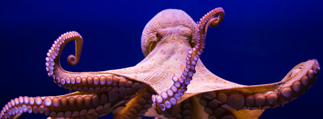 "The ""Now"" of Work & People Analytics: Lessons from an Octopus"